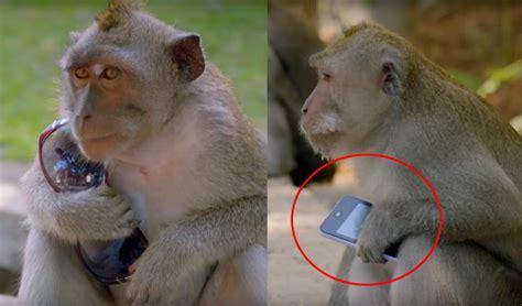 imagenes de niños que roban monos robando cosas a los turistas para negociar video