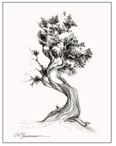 cedar tree tattoo cedar tree i like the strength in this ideas