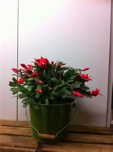 fleuriste isabelle feuvrier le cactus de no 235 l ou
