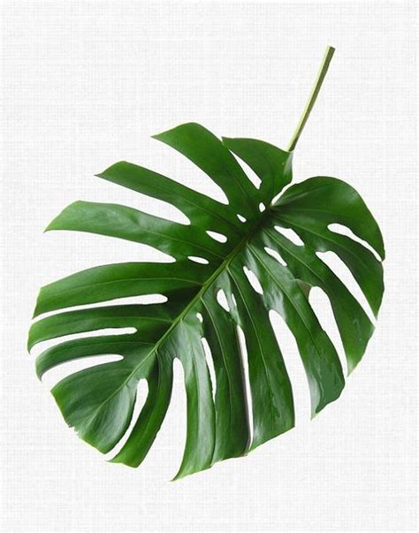 printable leaf art tropical leaf print monstera print printable art palm