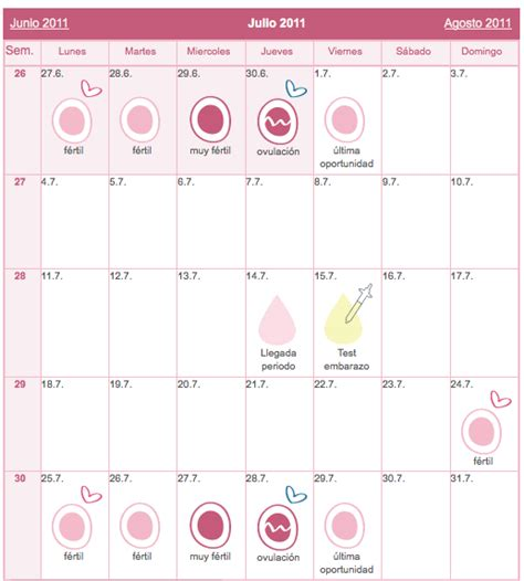 Calendario De Ovulacion Y Fertilidad La Ovulaci 243 N Y La Fase F 233 Rtil