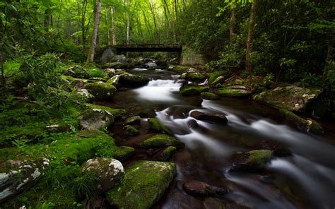 small mountain river riverbed  rocks  stones green