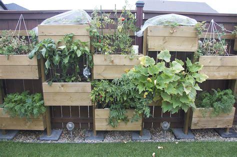 Vertical Gardening Zucchini Vertical Garden Week 14 The Dagenais Daily
