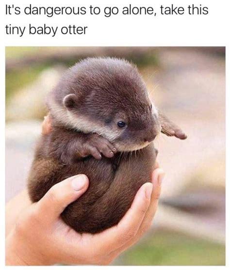 otter meme best 20 otter meme ideas on otters