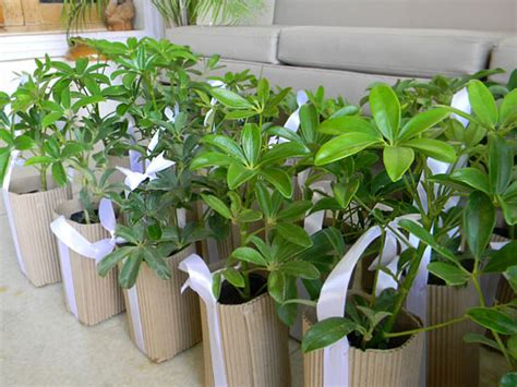 environmentally friendly trees gift a plant diy green gifting tutorial for eco friendly favors for nature and