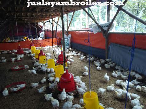 Jual Bibit Ayam Broiler Di Bogor jual ayam broiler di cileungsi bogor jual ayam broiler