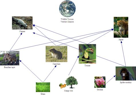 forest food chain diagram wildlife tycoon venture africa pm team 4