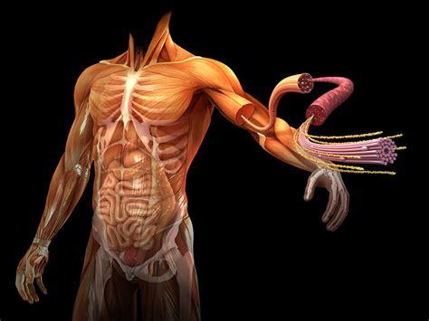 imagenes en 3d del cuerpo humano grandes infograf 237 as del interior del cuerpo humano quo