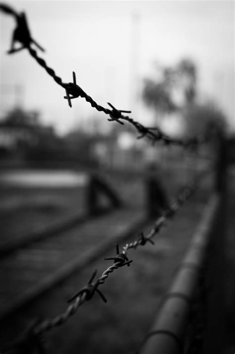 barbed wire black and white crime fence forbidden 183 free photo