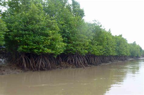 amazon vietnam tree of life deep in the delta stories from vietnam