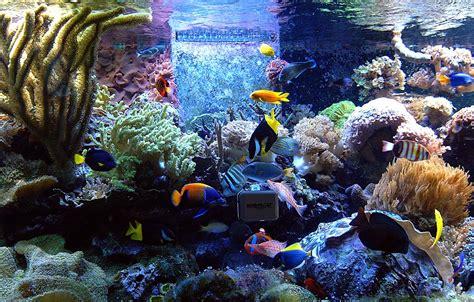 Aquarium Fish L by Aquarium Maintenance Aquarium Fish Fish