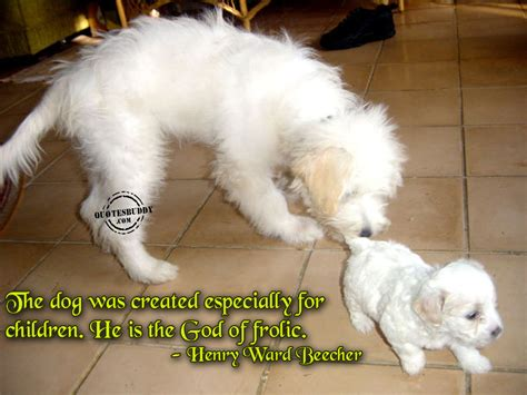 puppy pictures with sayings puppies quotes