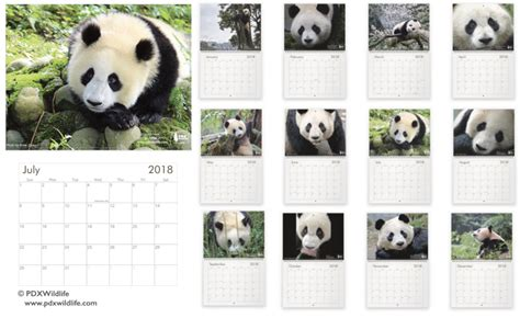 pandas 2018 calendar books pdxwildlife accomplishments in 2017 pdxwildlife