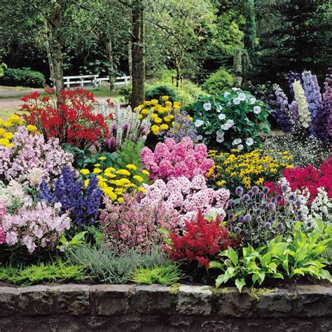 Gardens4you Online Garden Centre For All Your Hedges Flowers For A Cottage Garden