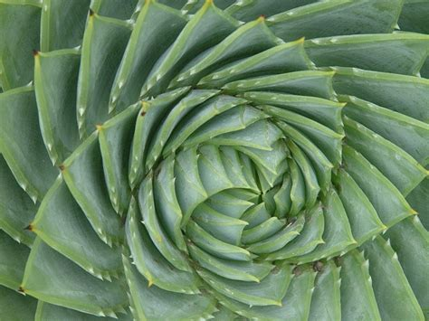 geometric patterns in nature 67 best images about nature s patterns on pinterest bird