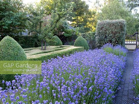 Lavender Garden Cottage by Gap Gardens Cottage Garden With Lavandula Angustifolia