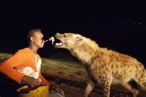 Ancient walls of islamic holy city keep hyenas out modern life at bay