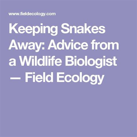 snakes  ideas  pinterest snake
