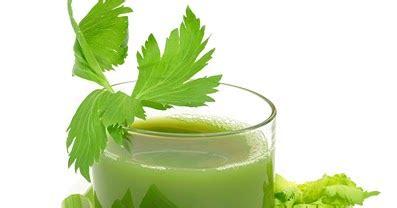 cara membuat jus mangga untuk ibu hamil cara membuat jus seledri cara membuat jus