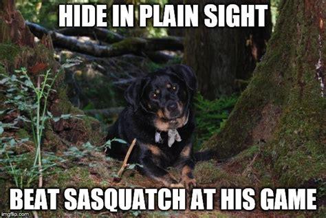 Plain Memes - squatch dog imgflip