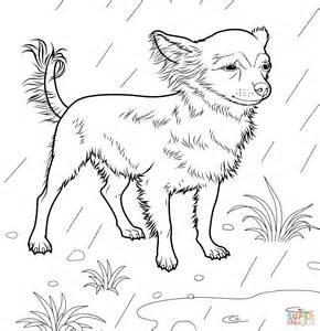 ausmalbild chihuahua kostenlos zum ausdrucken