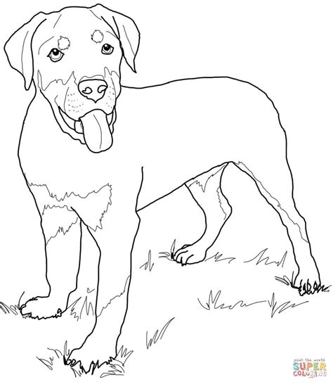 Rottweiler Coloring Pages Rottweiler Puppy Coloring Page Free Printable Coloring Pages