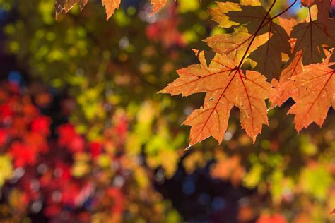 fall  vancouver bc