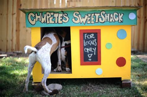 really cool dog houses 6 ways to give thanks to your dog this thanksgiving brit co