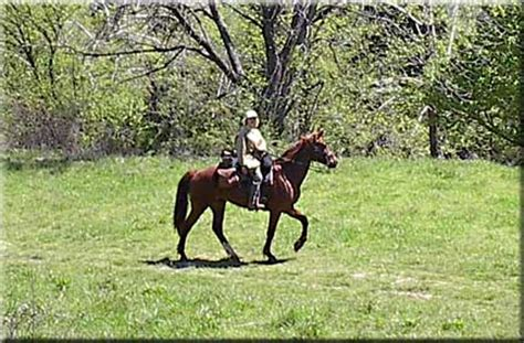 Meramec Farm Cabins by About Our Missouri Fox Trotter Horses