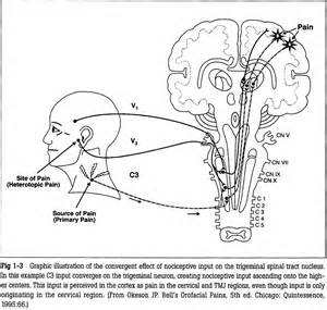 trouble 224 l articulation temporo mandibulaire