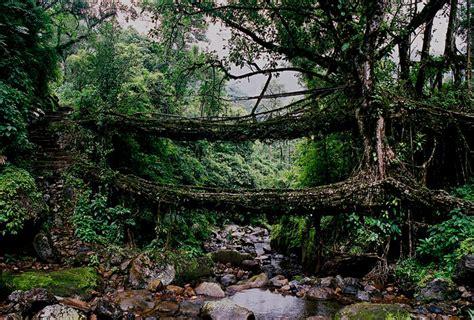 Living Bridges by Paradise Unexplored 8 Best Places For Adventure Tourism