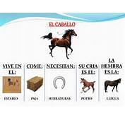 Caracter&237sticas De Los Animales La Granja