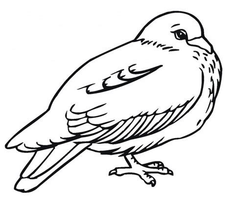 Coloring Page Quail by Free Printable Pigeon Coloring Pages For