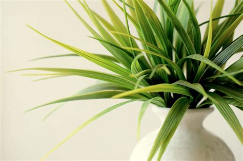 Office Plants That Don T Need Sunlight by 5 Office Plants That Don T Need Sunlight Plants For