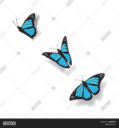 imagenes mariposas en movimiento vector y foto mariposa en movimiento bigstock