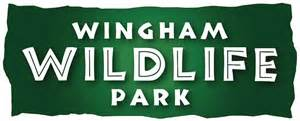 Holiday fun at wingham wildlife park heart kent events