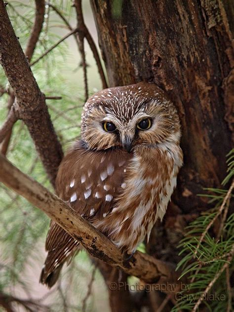 260515 in the forest hangs a best 25 forest animals ideas on pinterest