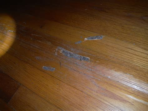 Termite Damage On Wood Floors   Carpet Vidalondon