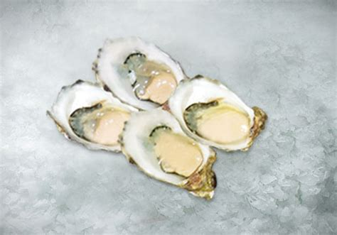 Oyster Shell L by Welcome To Sung Hock Chan Sdn Bhd