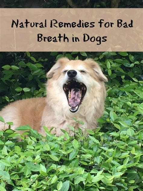puppy bad breath home remedy remedies for dogs bad breath unique and useful finds