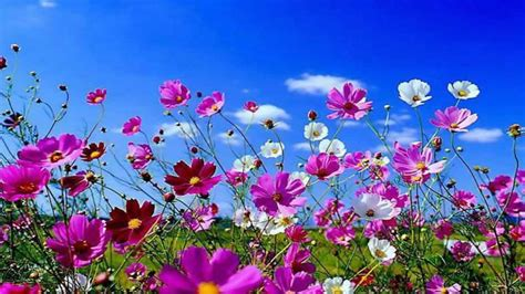 beautiful spring flowers top spring desktop wallpaper widescreen wallpapers