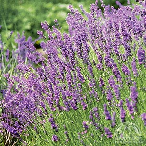1000 images about garden herbs on pinterest remember this