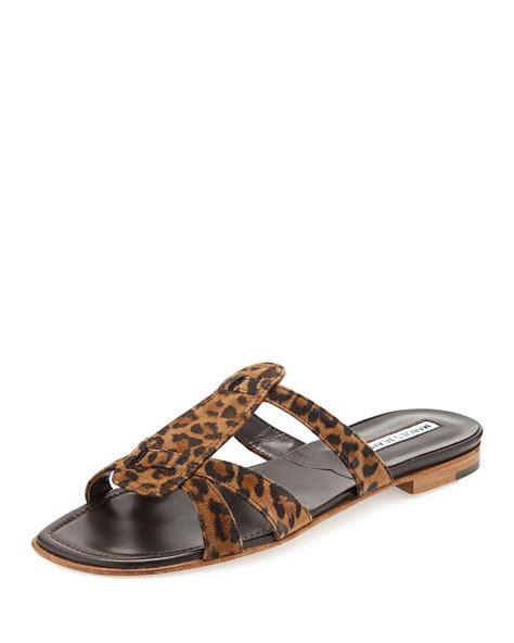 Sandal Leopard manolo blahnik fregia leopard print slide sandal lyst