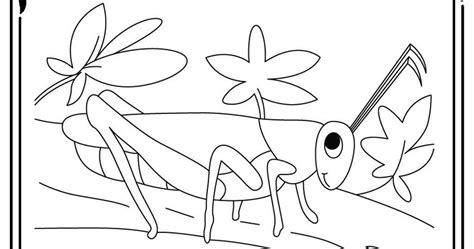preschool grasshopper coloring pages coloring pages of a grasshopper realistic coloring pages