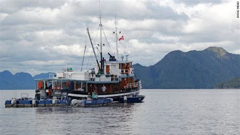 tugboat story how to land a king salmon the old fashioned way cnn
