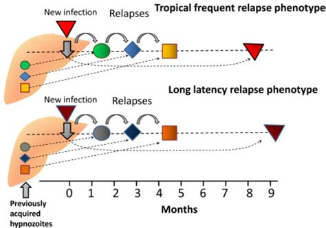 Most Relapses Occur In The 4 Months After Detox by Potential Similarity Of Relapse Patterns With The