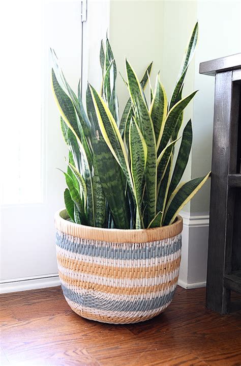 striped basket planter project page