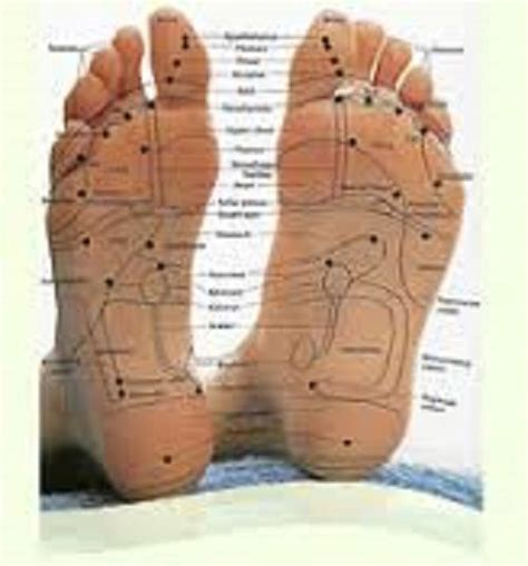 And Barrett Detox Foot Patches by 100 Detox Foot Pads Patches Herbal Remove Toxins Diet