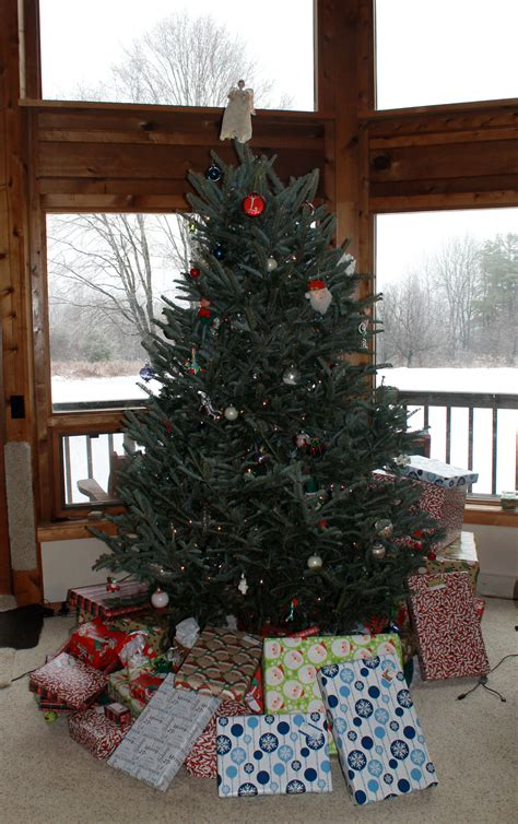10 things to do with your used christmas tree mynature apps
