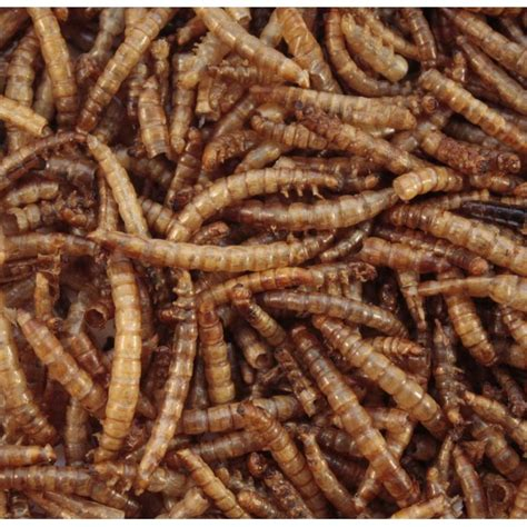 mealworms for birds british wild bird food and habitat